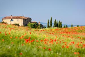 Toskana Italien Mohnfeld