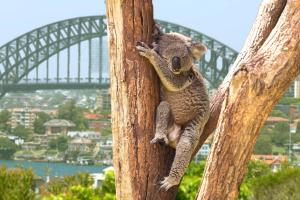 Australien Ostküste - Rundreise