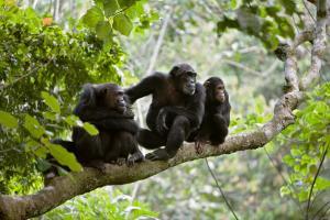 Uganda mit Berggorillas - Abenteuer-Rundreise