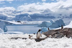 Antarctique & Géorgie du Sud - Croisiere