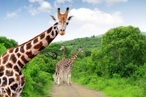 Sudafrica - Safari & balneare