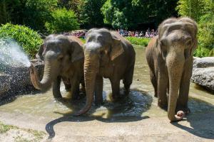 Zoo Hellabrunn - Monaco di Baviera