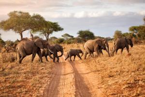 Sudafrica - tour & safari