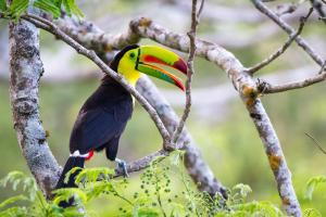 Costa Rica - Tour & vacanze balneari