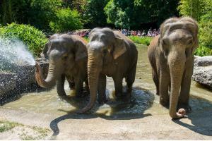 Tierpark Hellabrunn - München