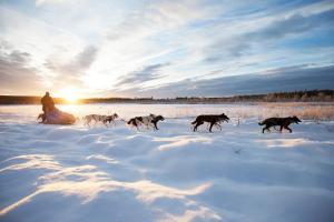 Lappland - Snow & Fun