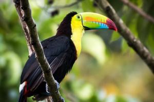Costa Rica - circuit & baignade
