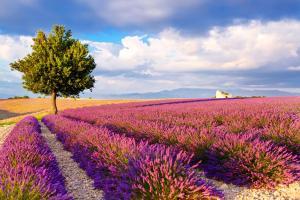 Frankreich Provence Lavendelfeld ALDI SUISSE TOURS