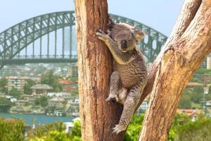 Region de l'Australie et de la Nouvelle-Zélande - croisière