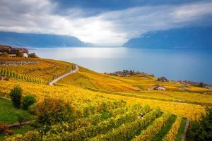 Wandern im Genferseegebiet ALDI SUISSE TOURS