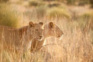 Südafrika - Safari & Kreuzfahrt